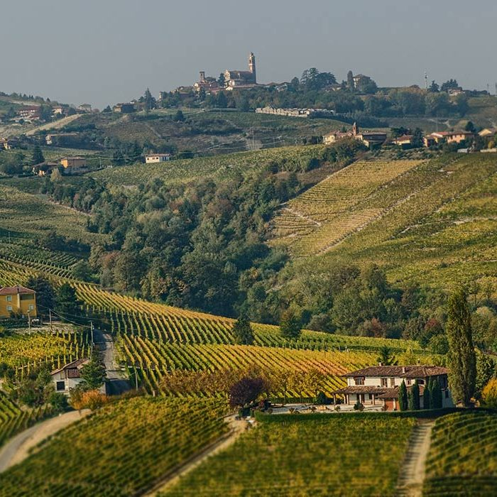 The wines of Monferrato